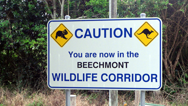 Wildlife Abounds Beechmont