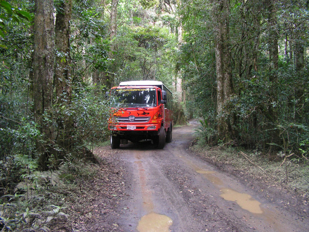 4WD through Rainforest