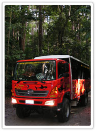 Rainforest Truck