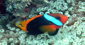 Great Barrier Reef Tour Photos 10