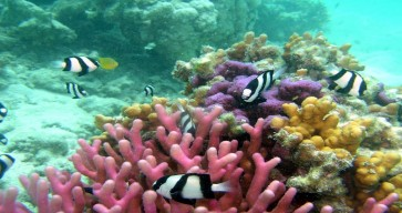 Great Barrier Reef Tour Photos 14
